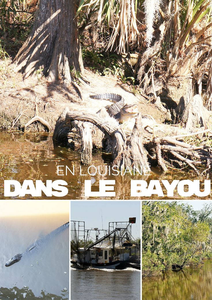 En Louisiane, dans le bayou, on croise des alligators : à faire lors d'un séjour à la Nouvelle Orléans