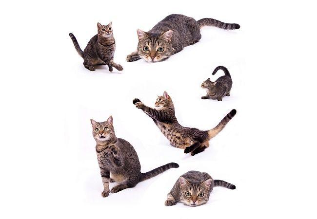 猫好きにはたまらない「猫島」という楽園。実は日本のあちらこちらにるというから少し驚きです。猫まみれになりたいあなたは必見!自分のお住まいの地域の近くに猫島があるかも!?安易な餌付けや無理やり触るなどの行為をせずにマナーを守って猫島で楽しめれば言うことなしです!今回はan・anの特別編集号でも紹介された「猫島」を見てみましょう。   「猫島」東北・関東編 田代島 東北は宮城県の田代島という島に「猫島」があるそうです。石巻港からおよそ15KMにある人口が80人ほ