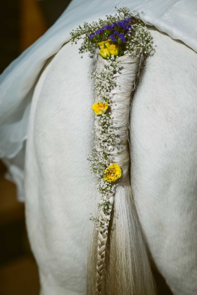 Horse tail with braid and flowers.  Gorgeous country wedding location near Sydney, NSW. http://www.chapmanvalleyhorseriding.com/australian-country-horseback-wedding/   White horse. Horseback wedding. Romantic wedding. Outdoor wedding. Unique wedding. Wedding Ideas. Plaited tail. Braided tail. Horse tail.