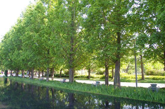 [#서울바캉스 ⑦] 영국에 하이드파크가, 뉴욕에 센트럴파크가 있다면 서울엔 서울숲이 있죠!  당초 골프장과 승마장이었던 곳을 서울시민 모두를 위한 공간으로  탈바꿈 시킨 공원으로, 푸르른 자연을 보고 즐기고 체험할 수 있는 다양한 프로그램들이 운영되고 있습니다.  서울숲 홈페이지 http://parks.seoul.go.kr/seoulforest