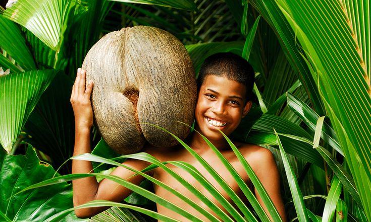Dünyanın En Büyük Tohumu - Hint Okyanusu'nda bulunan Seyşeller adalarında yetişen Coco de mer meyvesinin çekirdeği tam 30 cm genişliğinde ve 18 kg ağırlığında! Çin'de bitkisel ilaç ve yemeklerde lezzet arttırıcı olarak kullanılan Coco de mer, yetiştirilmesindeki zorluklar nedeniyle henüz ticarileşmeyi başaramadı. Ancak bir gün markette tek parça halinde bulunabilir hale gelirse, onu eve getirmek için ikinci kez düşünmek gerekecek!