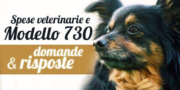 Modello 730/2015, detrazioni spese veterinarie: importi, limiti e modalità di compilazione... » Fbsocialpet.com: il social forum per cani, gatti, cavalli, tutti gli animali