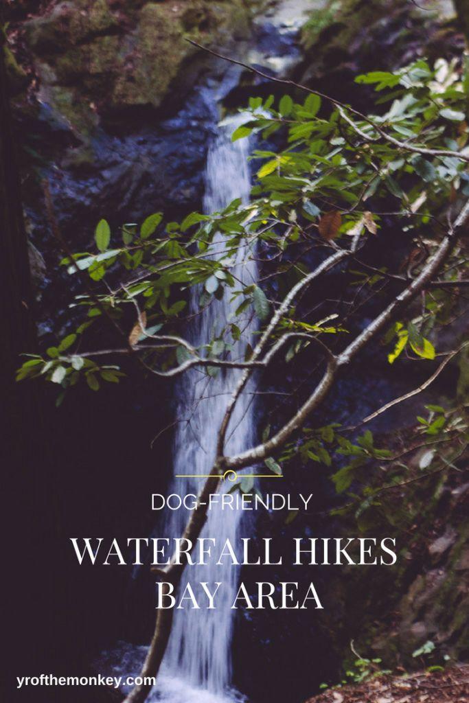 Carmel Dog Friendly Hikes