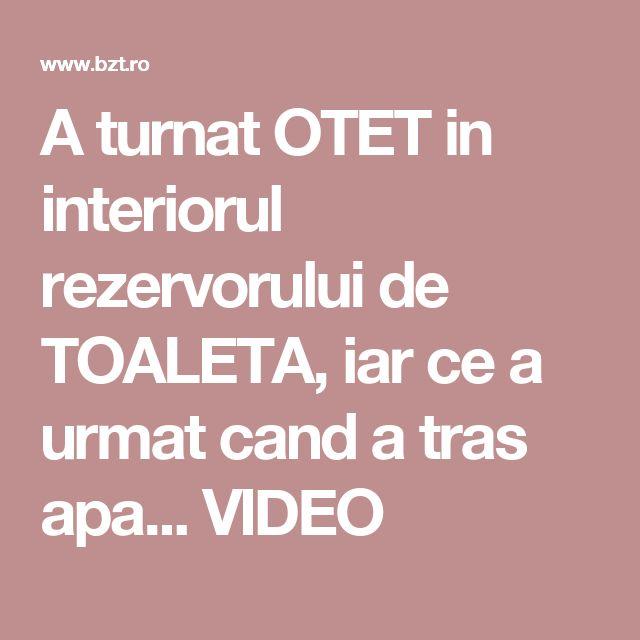 A turnat OTET in interiorul rezervorului de TOALETA, iar ce a urmat cand a tras apa... VIDEO