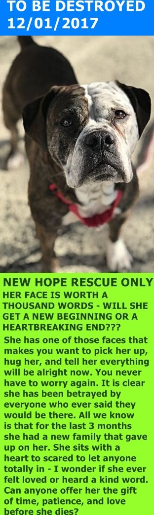 SAFE 12/1/17 by  Trailways to Heaven --- SUPER URGENT Brooklyn Center Hello, my name is Chicken . My animal id is #14372. I am a desexed female brown brindle dog at the Brooklyn Animal Care Center. The shelter thinks I am about 2 years 4 months 1 weeks old.  I came into the shelter as a owner surrender on 22-Nov-2017, with the surrender reason stated as animal behaviour – aggressive towards people.  http://nycdogs.urgentpodr.org/chicken-14372/