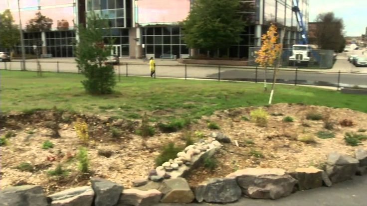 All About Rain Gardens