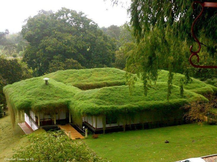 toit vegetale Tout sur la toiture végétalisée