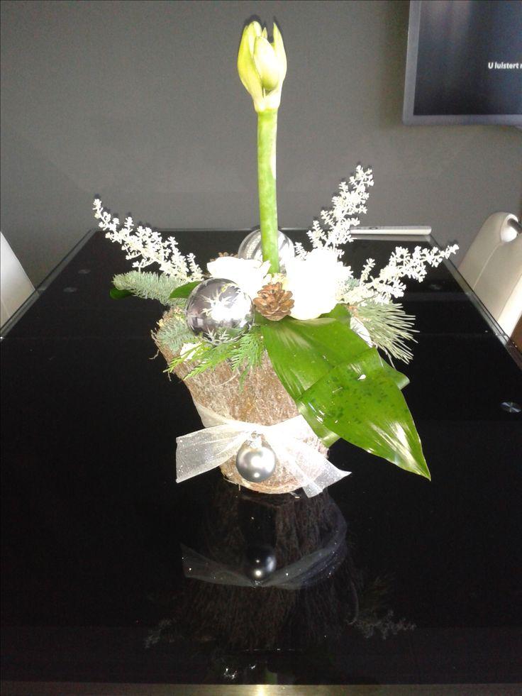 witte amaryllis in mand 2016