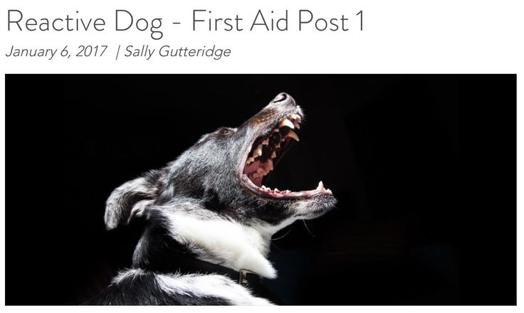 Dog Blog - Reactive Dog First Aid - Post 1