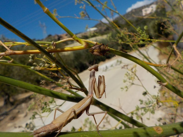 The delights of Autumn revealed as the #CreteNature blog visits The Springs of Paraspori: http://bit.ly/2xI5llf (scheduled via http://www.tailwindapp.com?utm_source=pinterest&utm_medium=twpin)