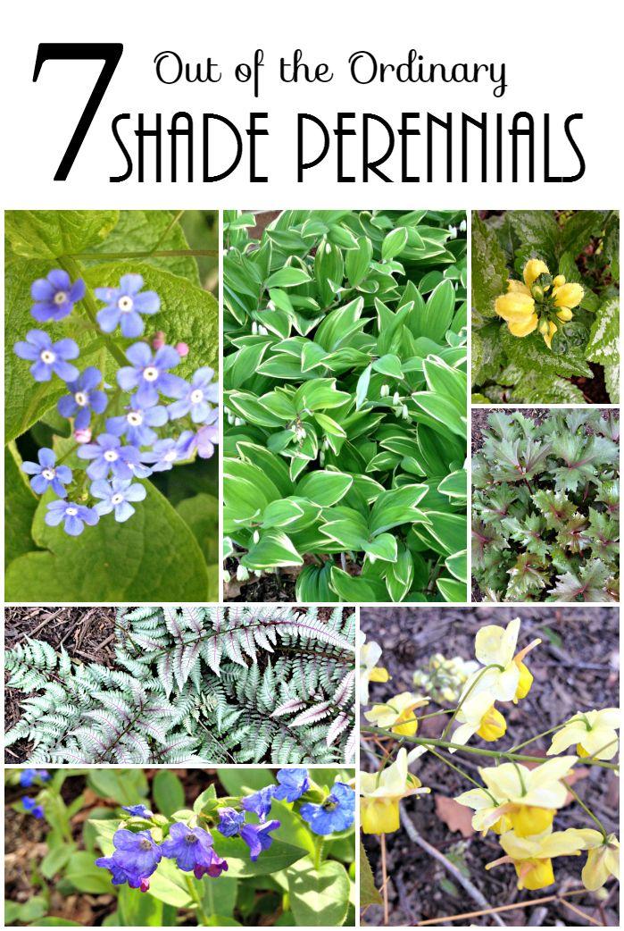 Shade Perennials #dan330 http://livedan330.com/2015/08/14/7-ordinary-shade-perennials/