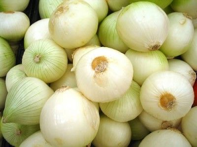Cultivar cebollas 1