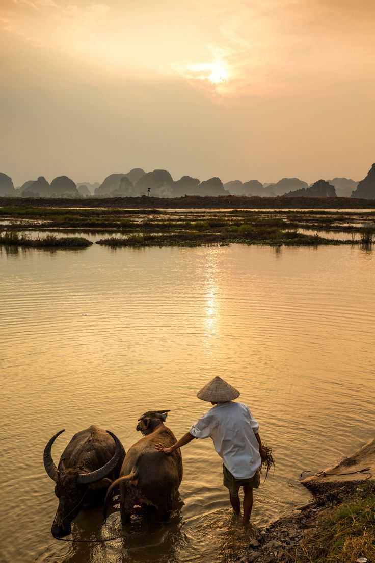 Vietnam by Matt Quinton on 500px Please like, share, repin or follow us on Pinterest to have more interesting things. Thanks. http://hoianfoodtour.com/