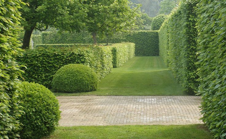 hornbeam hedges enclose this green garden room whilst two box balls stand sentinel beside a brick path