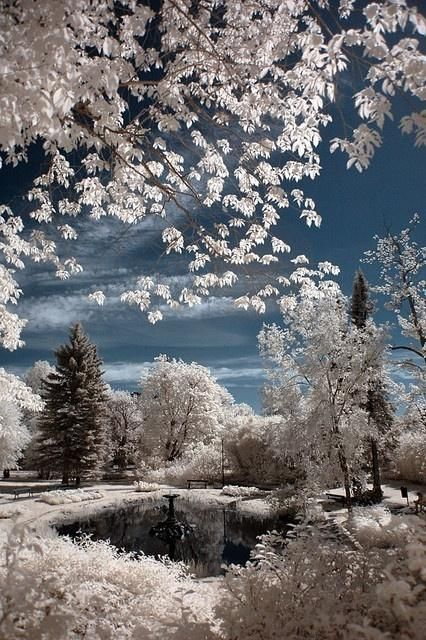 A winter wonderland....