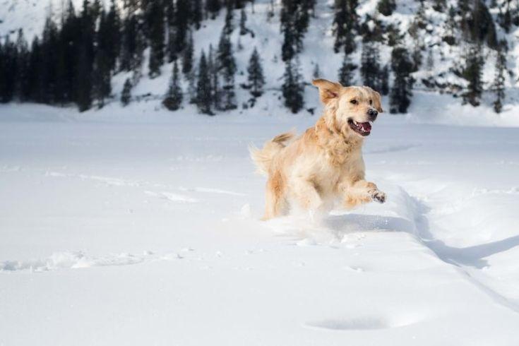 Urlaub Mit Hund Sudtirol Italien Urlaub Mit Hund Hunde Und Tiere Hund