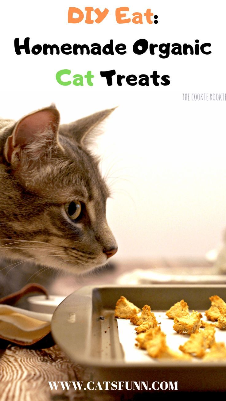 9 Purrfect Homemade Treats For Your Cat In 2020 With Images Homemade Cat Treats Recipes Cat Treats Homemade Wellness Cat Food