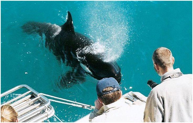 Auckland Whale and Dolphin Safari