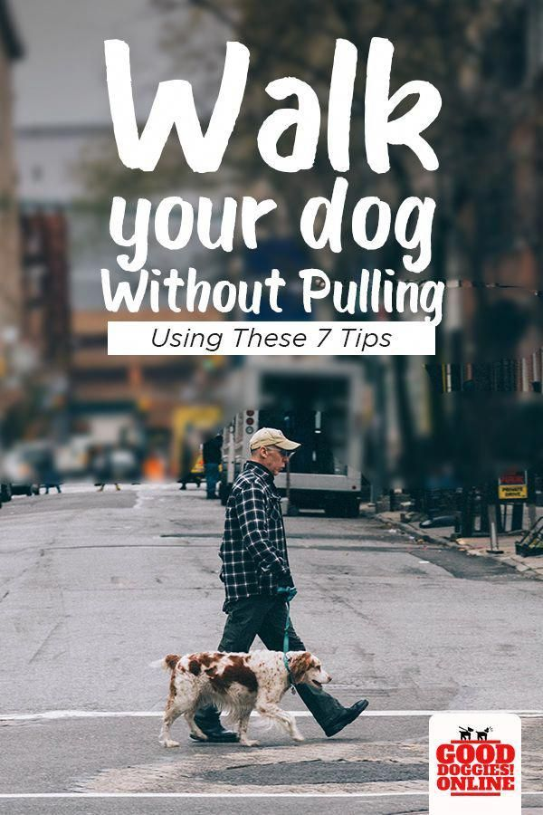 How To Train Your Dog To Walk On A Leash Without Pulling Dog