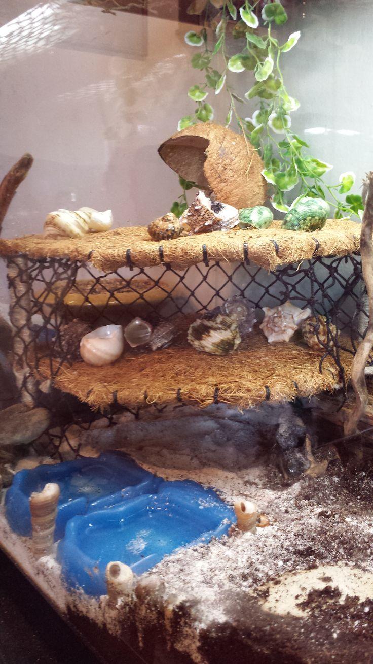 Best Hermit Crab Habitat Pictures To Pin On Pinterest