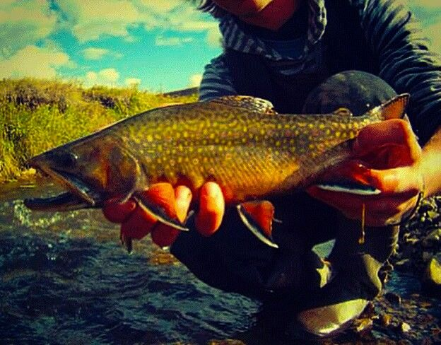 Summer brookie caught by KONTRA Team member Cam  #kontra_apparel #trout  #brooktrout #flyfishing #outdoors #fishing