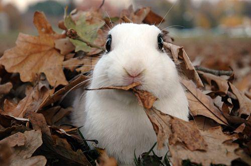 Funny Bunnies, Fall Bunnies, Fall Time, Adorable, Cute Funny, Leaves, Bunnies Rabbit, Albino Gopher, Animal