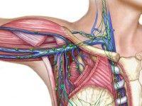 Lymfeklieren in de oksel (klik op foto voor vergroting) [bron: www.dynasilproducts.com]