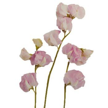 FiftyFlowers.com - Sweet Peas Light Pink Flower
