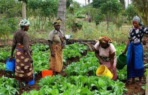 35,000 farmers register for CBN/anchor borrower scheme in Edo: Edo State government said a total of 35,000 farmers were registered for the…