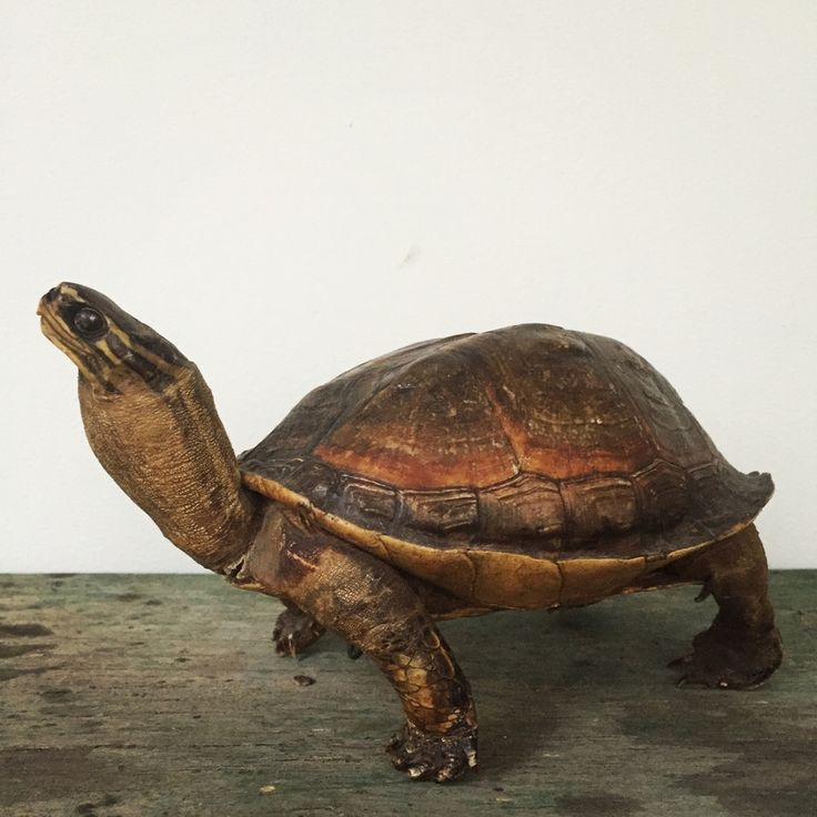 """The Unique Pieces we sell: The taste of Petrol and Porcelain 