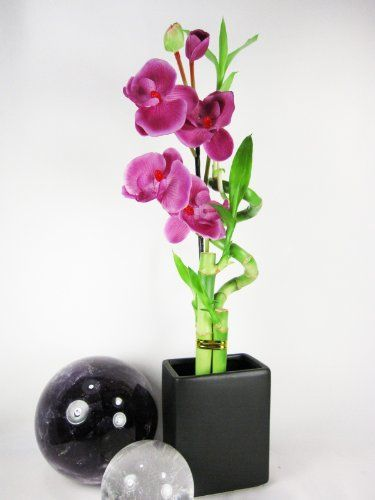 9GreenBox - Live Spiral 3 Style Lucky Bamboo Plant Arrangement w/ Black Ceramic Vase & Silk Orchid Flower $14.99