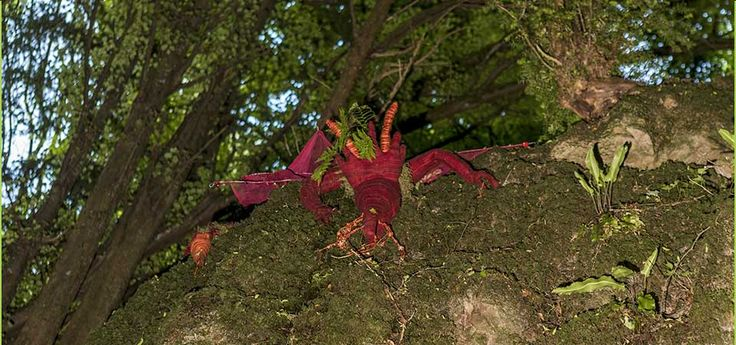 8th June - Due to bad weather and high winds Puzzlewood is closed today...