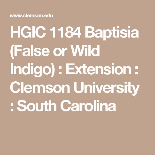 HGIC 1184 Baptisia (False or Wild Indigo)   : Extension : Clemson University : South Carolina
