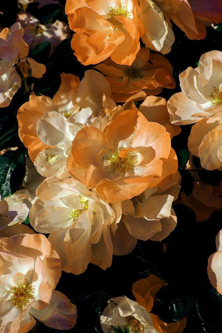 Lillaluv On Pinterest En 2020 Fond D Ecran Telephone Fleurs Fond D Ecran Iphone Fleur Fond D Ecran Telephone