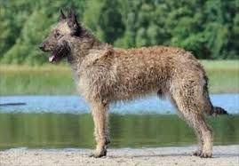 Laekense herder  De Laekense herder is een ras dat hoort bij de Belgische herders. De honden zijn vernoemd naar de Brusselse deelgemeente La...
