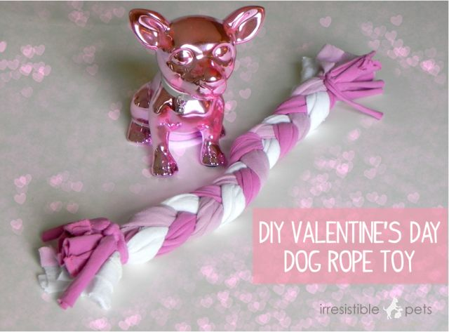 Valentine S Day Talking Toys : Best images about diy for animal shelters on pinterest