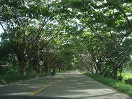 Caminar por aquí es relajante!!!