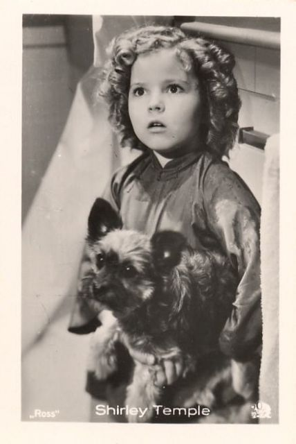 Shirley Temple &  a Cairn Terrier | 1930s.