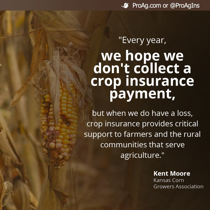 Crop Insurance Social Share - Every year, farmers hope they don't need crop insurance, but when disaster strikes, it provides critical support.