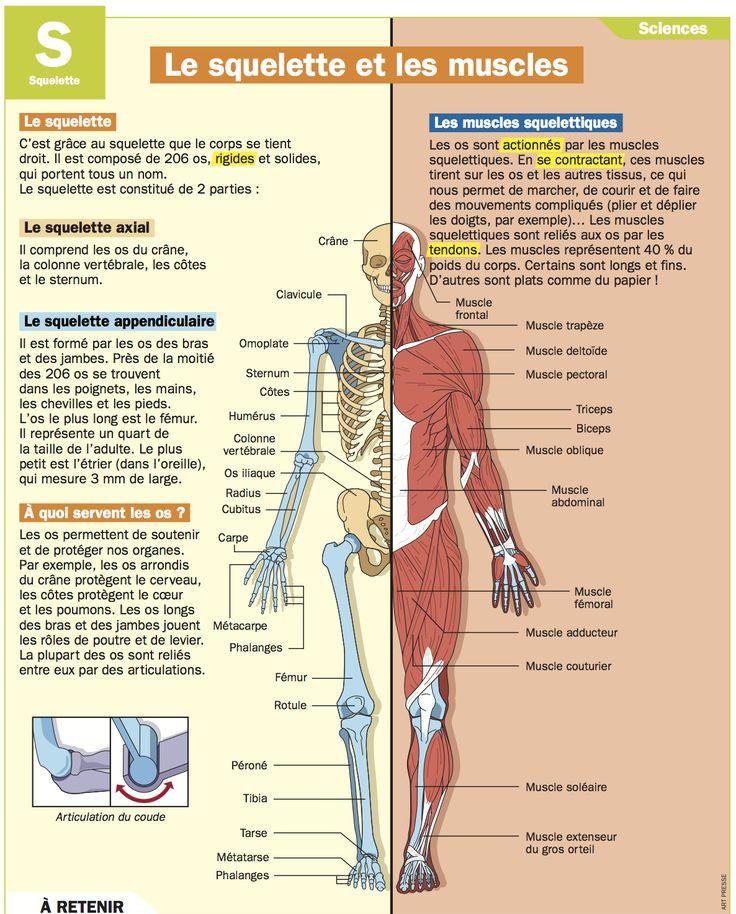 Le squelette et les muscles