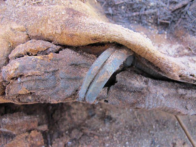 Egipto: Hallan cementerio con más de un millón de momias dic 17, 2014 @ 01:44 am › Un grupo de arqueólogos de la Universidad Brigham Young de Estados Unidos realizaron un espectacular descubrimiento: un cementerio con más de un millón de momias egipcias.   Esta pequeña momia pertenece a una niña de 18 meses de edad. Tiene un collar y brazaletes en ambos brazos. Fue enterrada con muchos cuidados, lo que evidencia el esmero de sus seres queridos por darle una digna sepultura.  El cementerio…