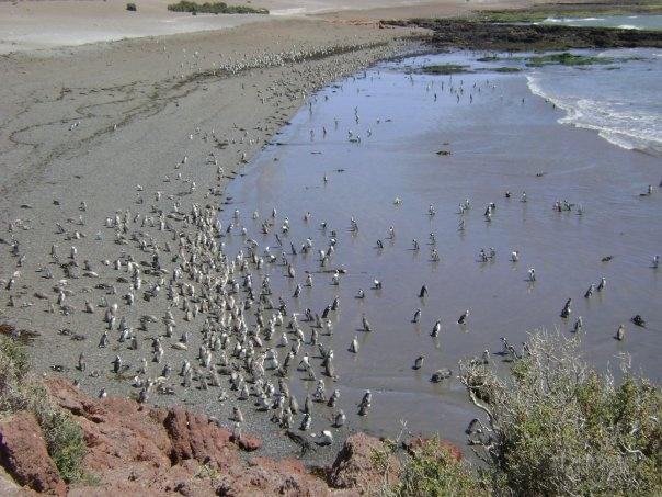 Punta Tombo, Chubut, Argentina.