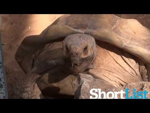 cool Wow, This Tortoise Does a Pretty Good Owen Wilson Impersonation