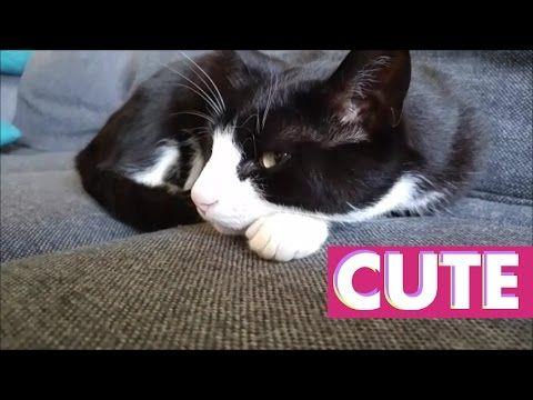 CAT SIESTA