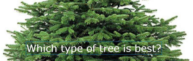 die besten 25 types of fir trees ideen auf pinterest. Black Bedroom Furniture Sets. Home Design Ideas