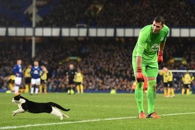 【1月10日 AFP】9日に行われたイングランドFAカップ(FA Cup 2015-16)3回戦のエバートン(Everton)対ダゲナム・アンド・レッドブリッジ(Dagenham and Redbridge)戦のピッチに猫が侵入し、観客の注目をさらうという一幕があった。