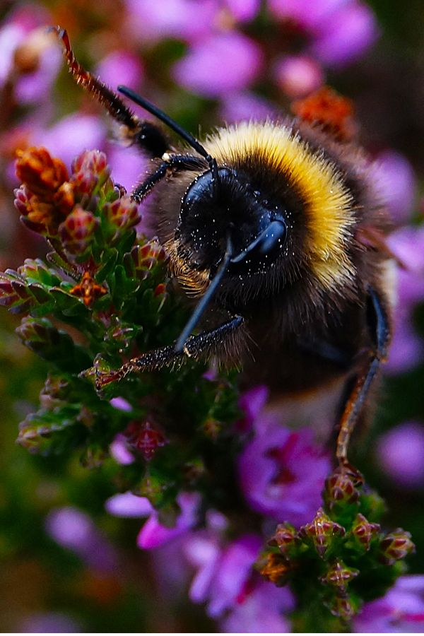 321 best bee loved images on Pinterest | Bees, Honey bees ...