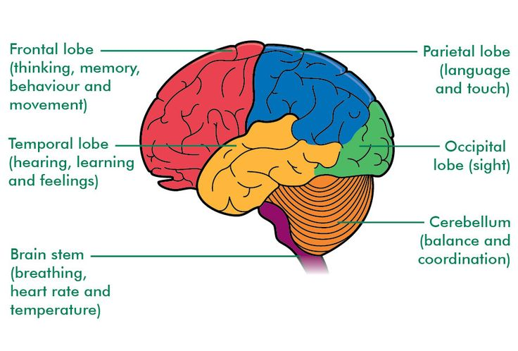areas of the brain - Google Search