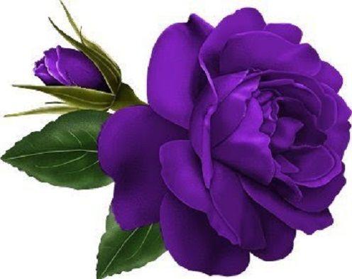 614 best atvirukai su ro e images on pinterest decoupage art rh pinterest com Pink Rose Bud Clip Art New Year's Eve Clip Art
