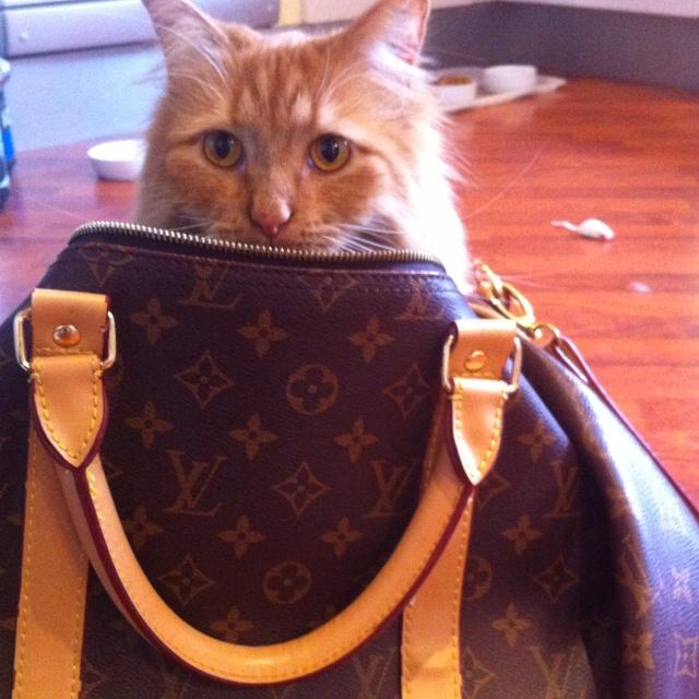 Louis Kitty